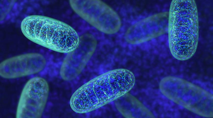 Inne enzymy
