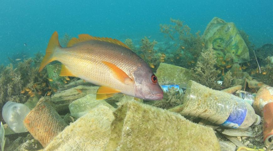 Kiedy spożywanie ryb może być niezdrowe?