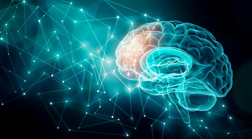Witaminy dla mózgu - biochemia i regeneracja mózgu