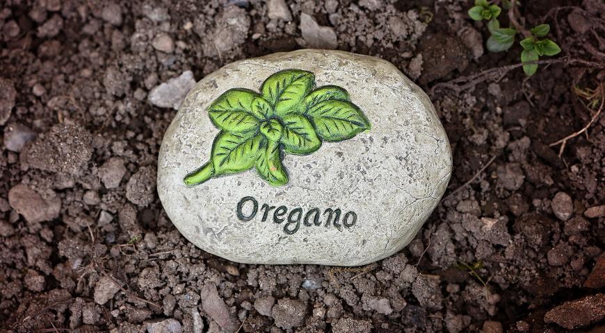 Oregano  - poznaj jego zastosowania