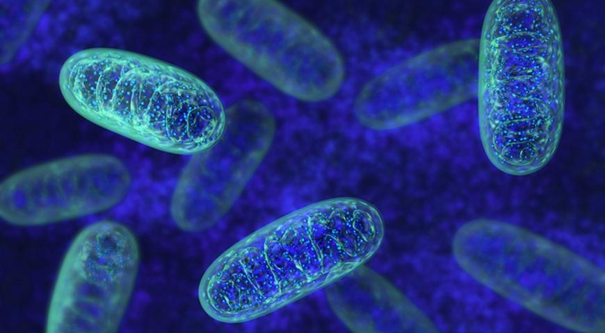 Założenia diagnostyki mitochondrialnej