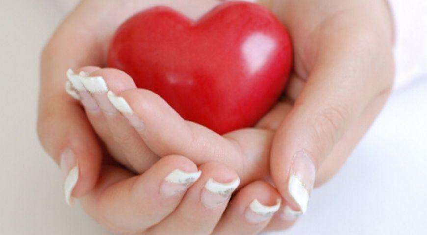 Zdrowe serce mitochondria