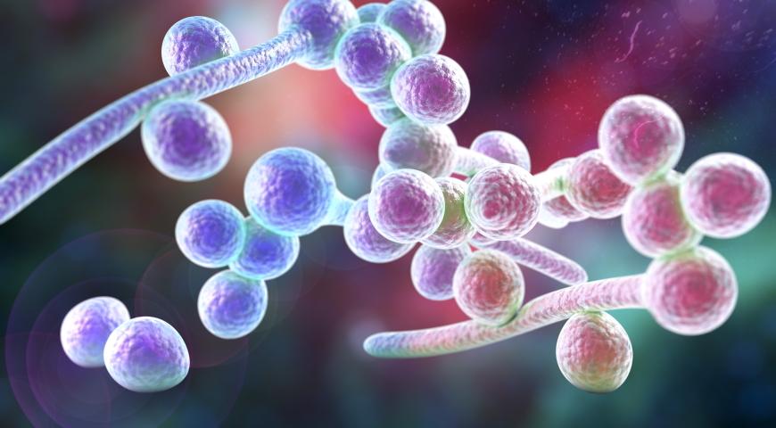 Mito-terapia kandydozy narządów wewnętrznych