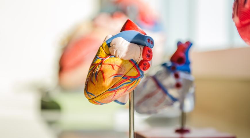 Zawał serca – czynniki ryzyka, profilaktyka oraz rekonwalescencja